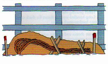 Mănunchiul de ramuri al trandafirului urcător se poate fixa de sol cu ajutorul unor țăruși încrucișați.
