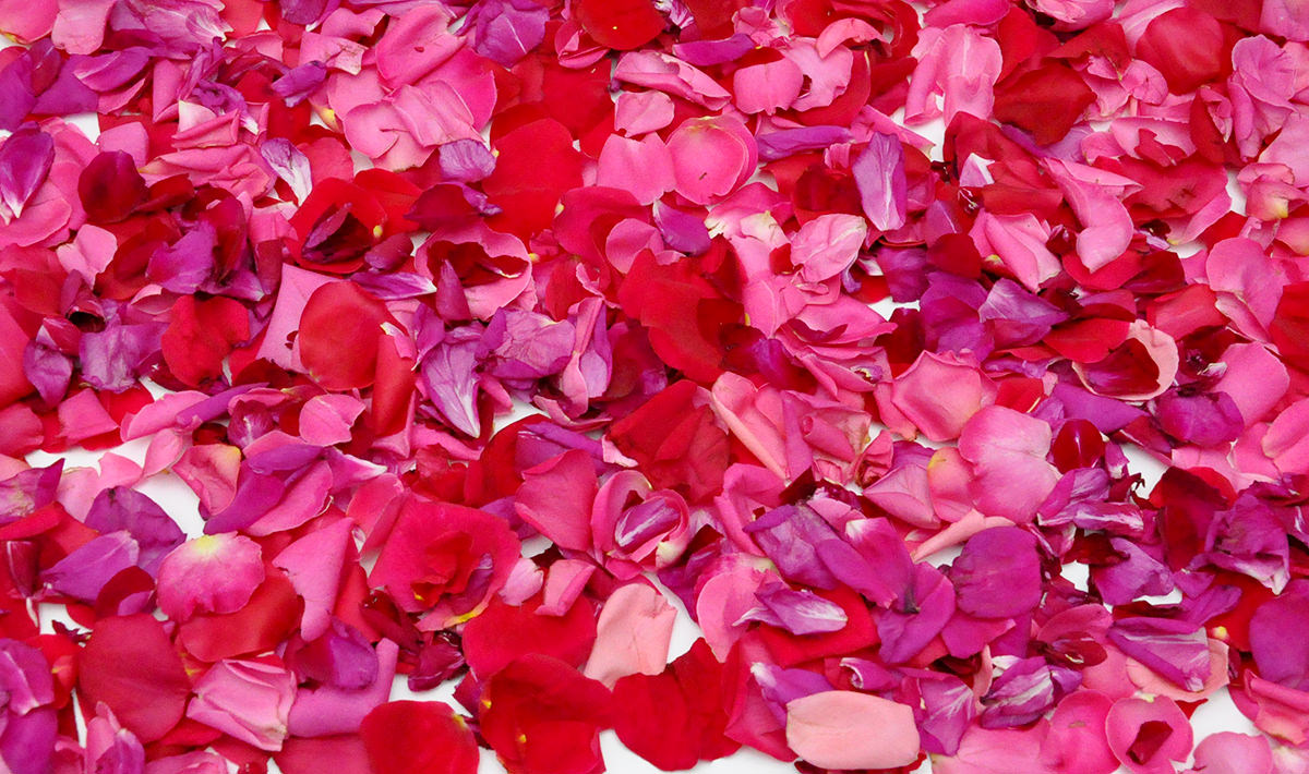 ulei de trandafir ulei varicos