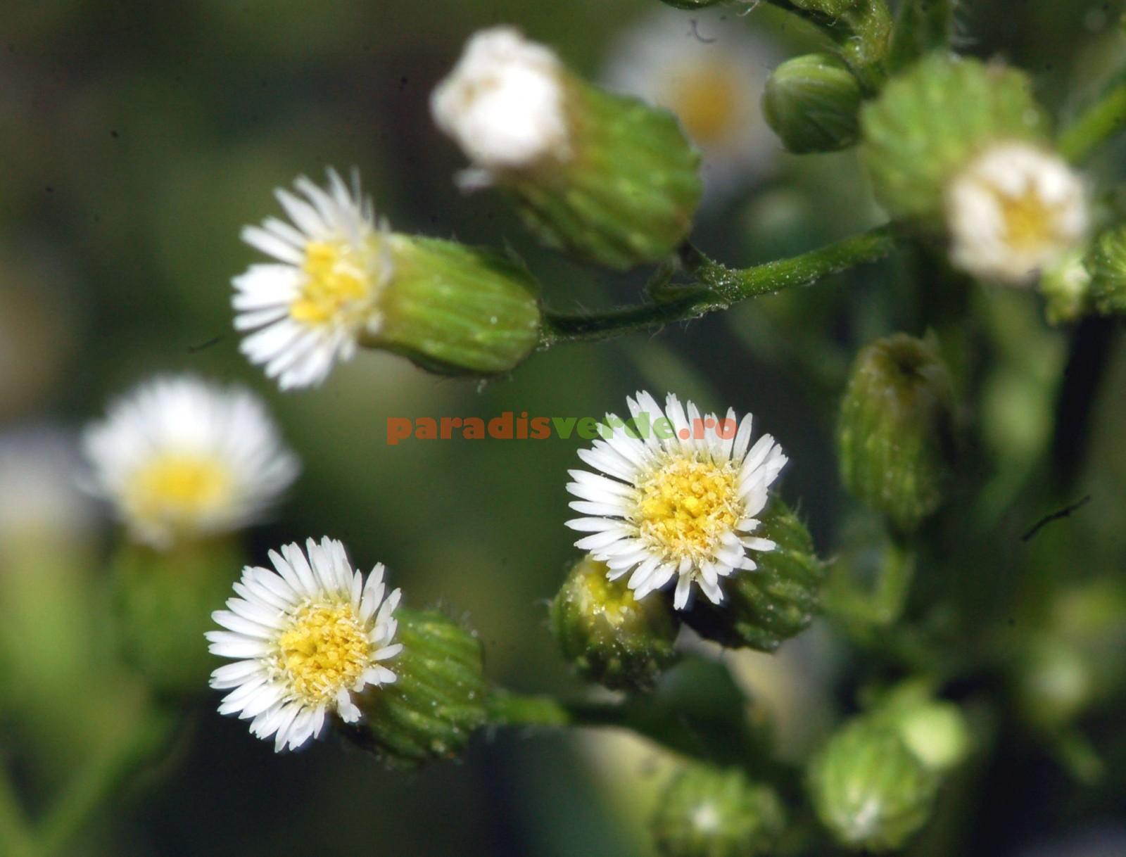 Tratament Natural Pentru Reumatism - Cataplasme Si Bai Calde Cu Plante | Libertatea