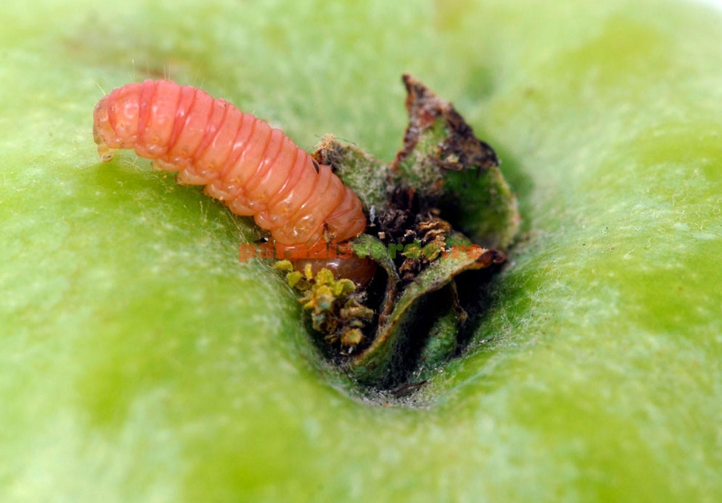 o mai bună curățare a paraziților ultimele pastile de la viermi
