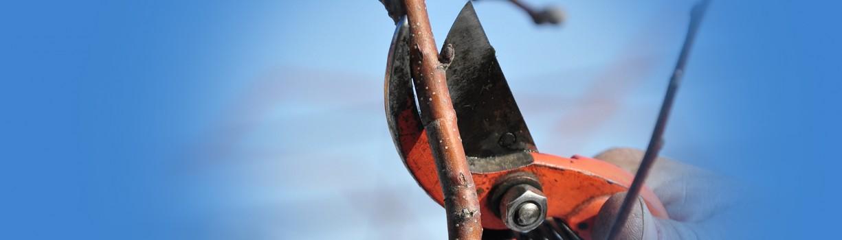 Știința tăierilor la pomi