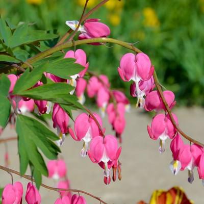 Tije florale de eleganță deosebită!
