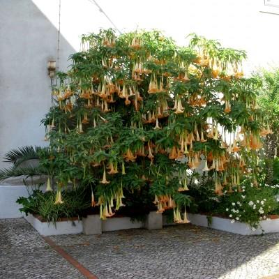Trompeta îngerilor în Portugalia