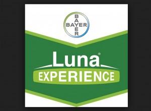 Luna Experience