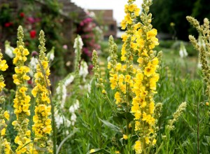Elegante tije florale de lumânărică
