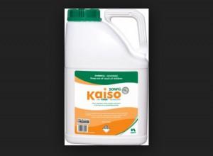 Kaiso Sorbie 5 EG