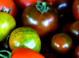 Tomate de grădină