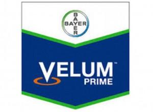 Velum Prime 400 SC