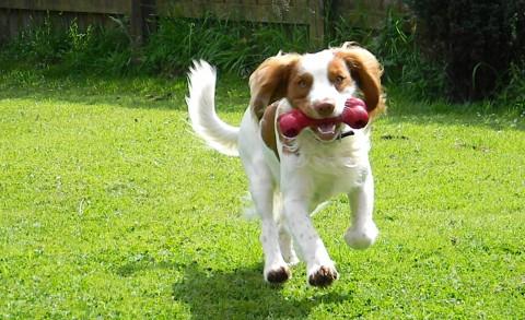 Relația câinelui cu gazonul are și aspecte neplăcute