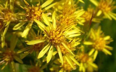 Flori de splinuță: ca niște speluțe!