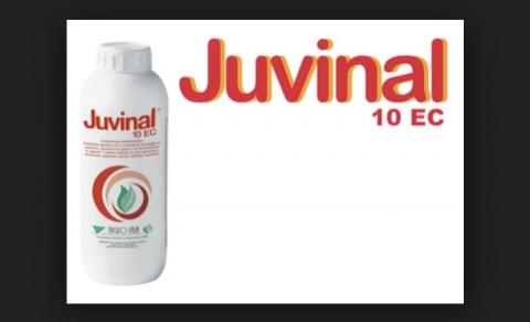 Juvinal 10 EC