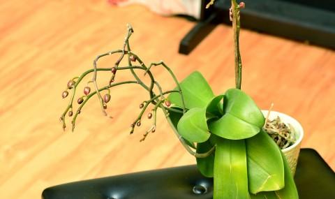 O orhidee mulțumită de lumina pe care o primește