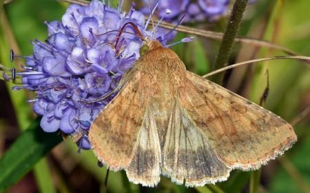 Omida fructificațiilor: fluturele