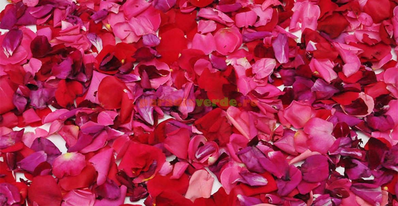 Pentru dulceață de trandariri puteți folosi petale de la toate soiurile parfumate.