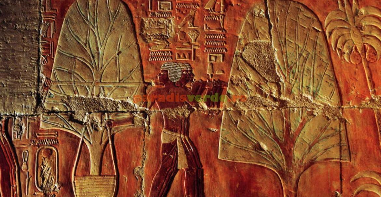 <p>Transplantarea arborilor de mari dimensiuni era practicată şi &icirc;n Egiptul Antic.</p>