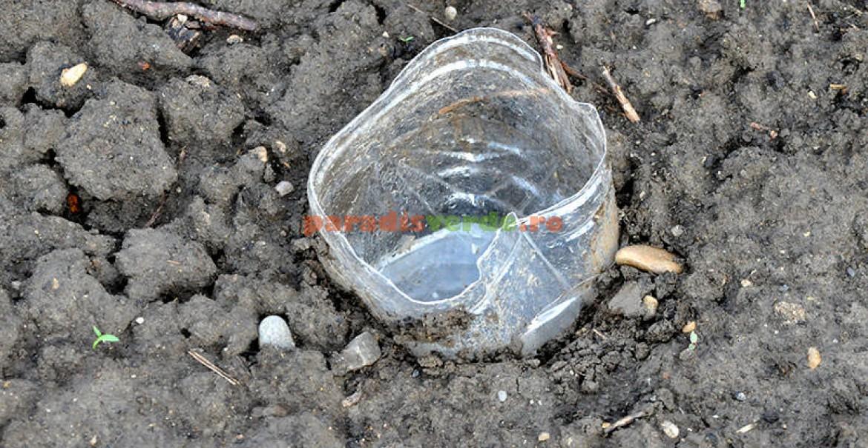O capcană îngropată. După o ploaie, va trebuie să curăţaţi capcana, să puneţi din nou bere şi să nivelaţi cu atenţie pământul în jurul ei.