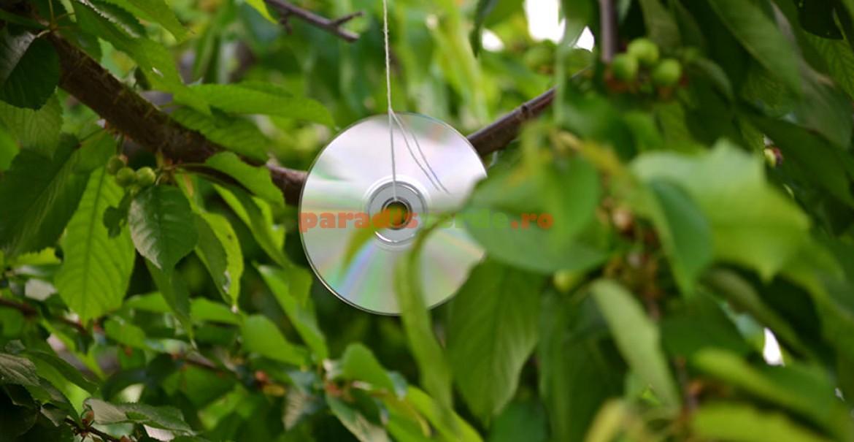 Un compact-disk bine poziționat alungă păsările pofticioase