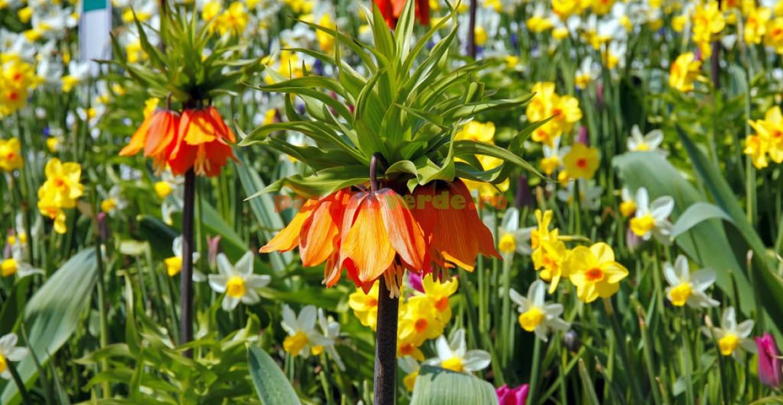 Floarea Paştelui cu narcise