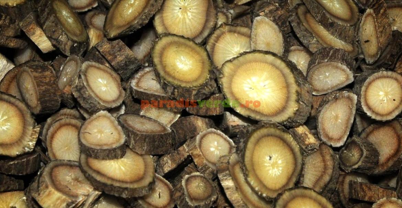 Rădăcini de brusture