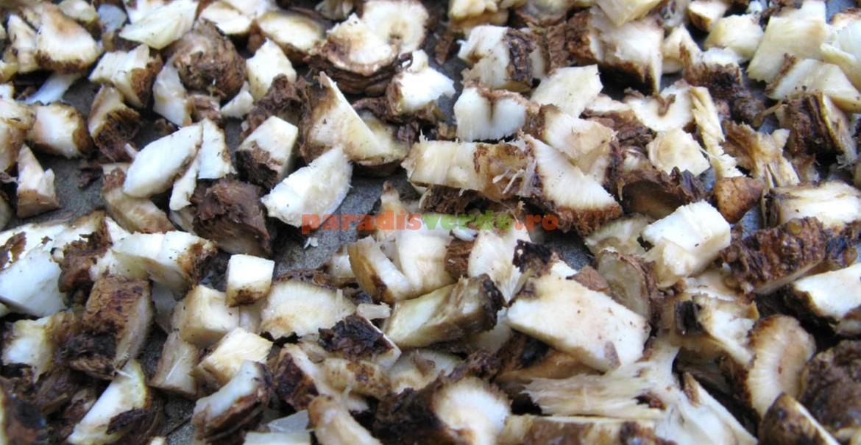 Rădăcină de cicoare mărunțită, pregătită pentru uscare