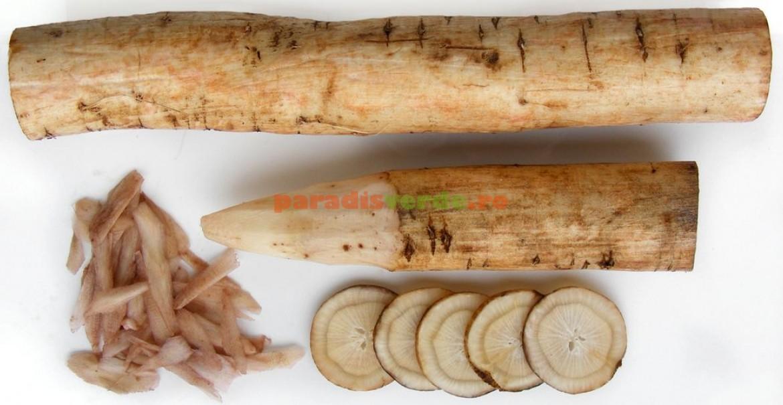 Rădăcini de brusture în diferite secțiuni