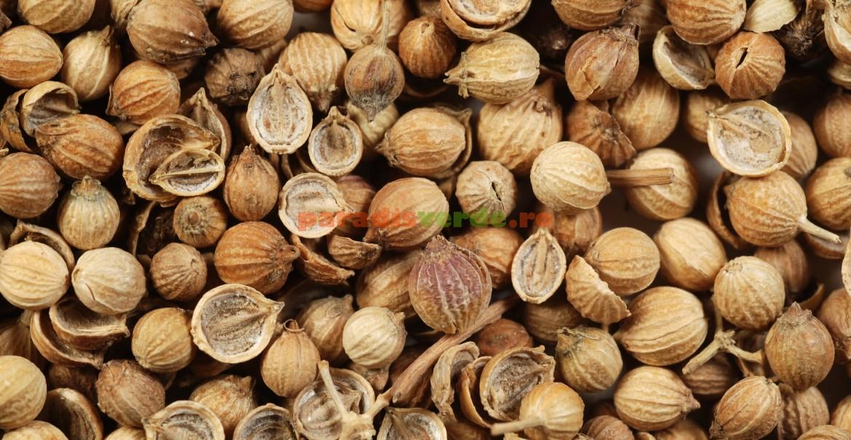 Fructe de coriandru