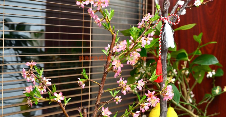 Piersic înflorit în martie