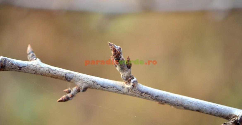 Buchetul de mai - ramură floriferă de prun