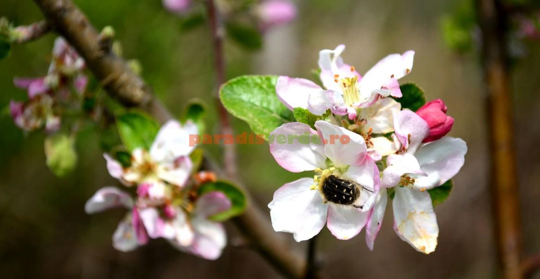 Nu polenizează, ci roade organele florii!