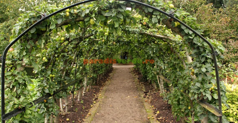 Tunel fructifer