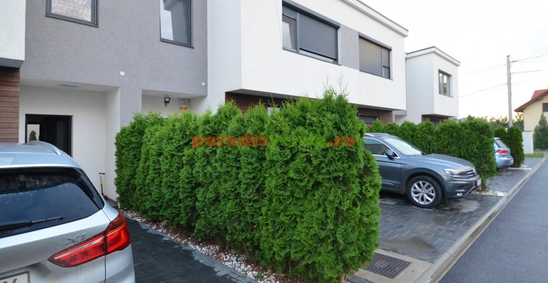 Gard veșnic verde din tuia Smaragd